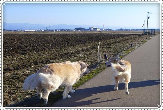 2014,1,30お散歩3