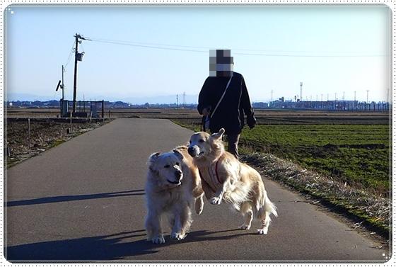 2014,1,30お散歩2