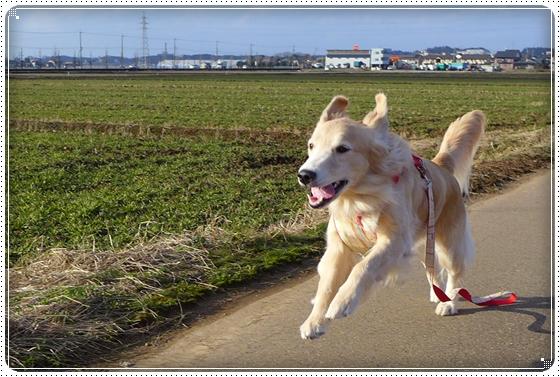 2014,1,31お散歩5