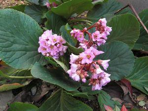 春の花 003