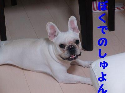 CIMG0440.jpg
