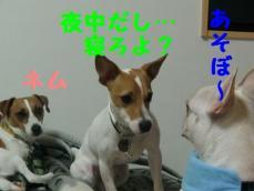 CIMG0455_20100910004809.jpg