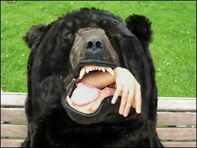 bear_006_m.jpg