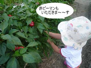 maika22092211.jpg