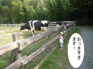 maika2210148.jpg