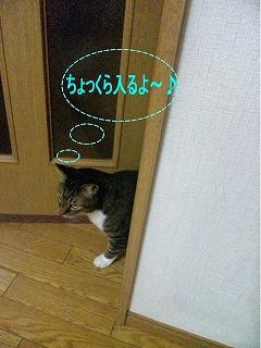 cojirou.jpg