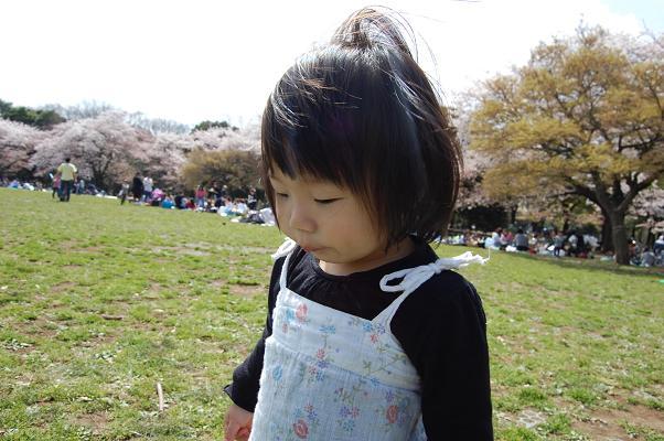 20100410_お花見5
