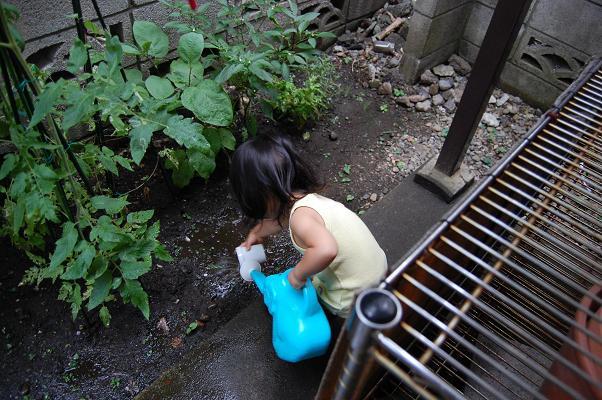 20100724_収穫祭3