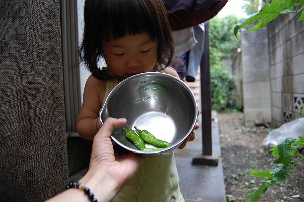 20100724_収穫祭2