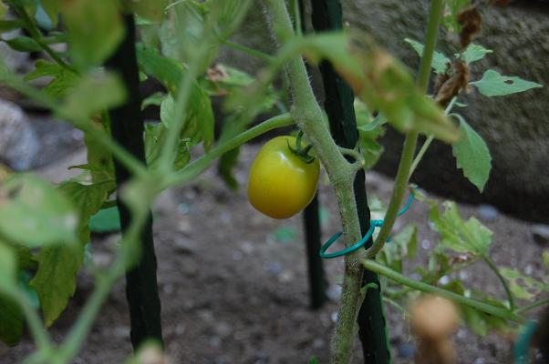 20100817_農園3