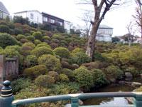根津神社ツツジの丘
