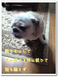 20100123av001up.jpg