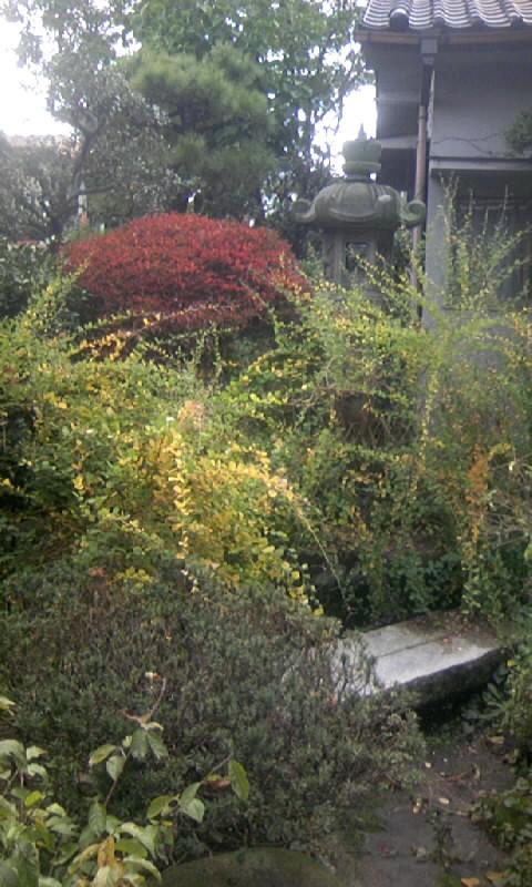 091114_124408萩の黄葉