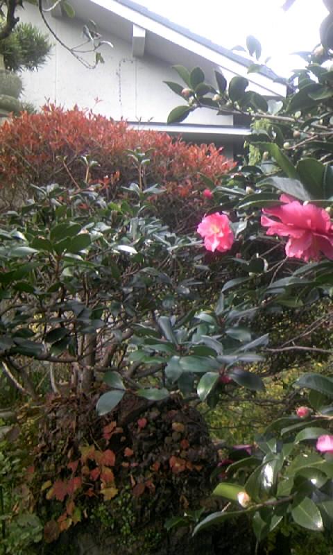 091115_11285711月の庭