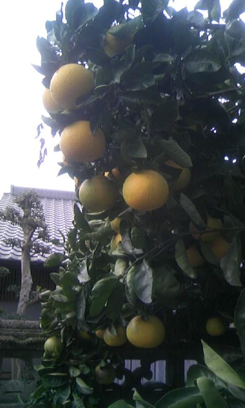 091122_073930柑橘