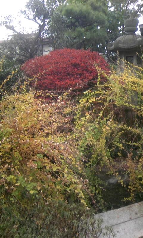 091124_133614紅葉&黄葉