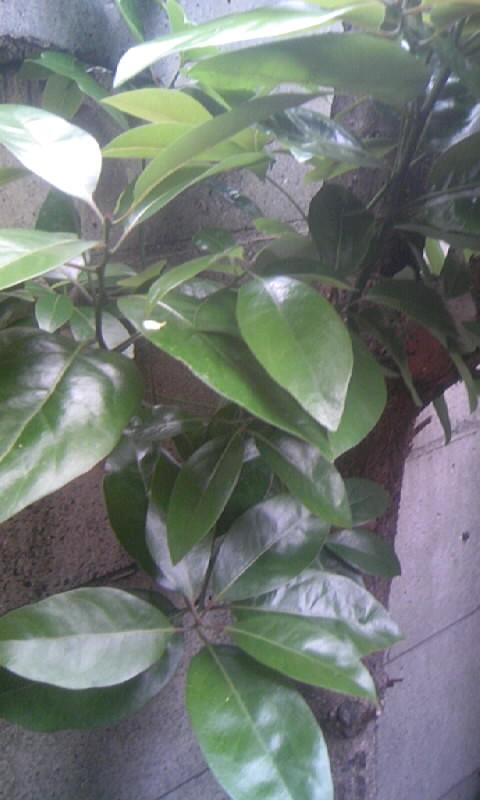 091124_155944何の木?