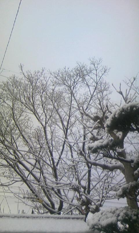 091219_074235雪の庭