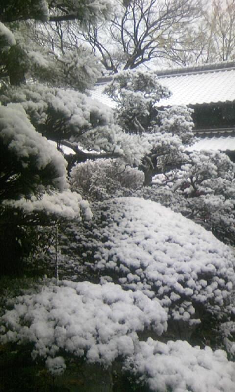 091219_075356雪の」