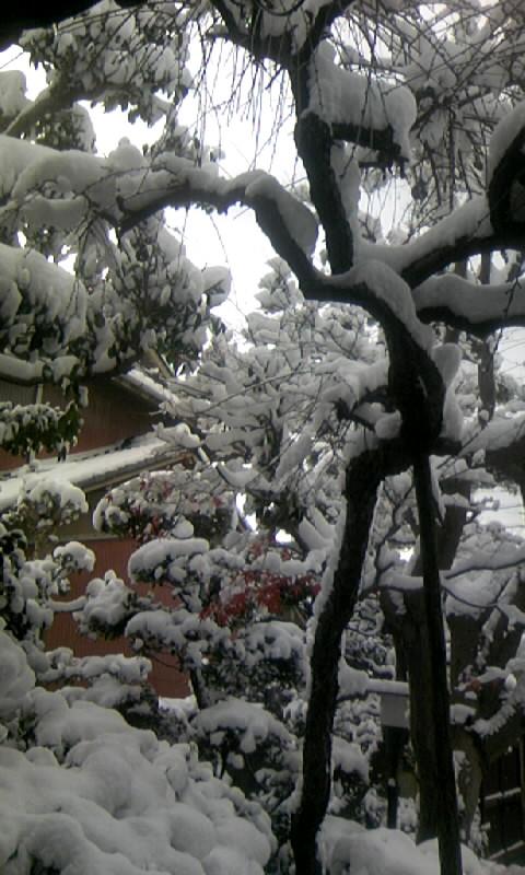 100101_092249庭の雪景色