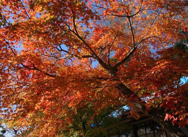 katakamakura20101215