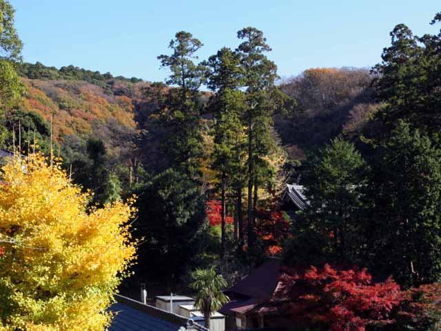 katakamakura20101213