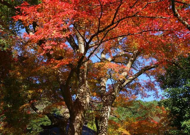 katakamakura20101217
