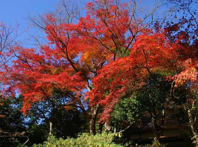 katakamakura20101218