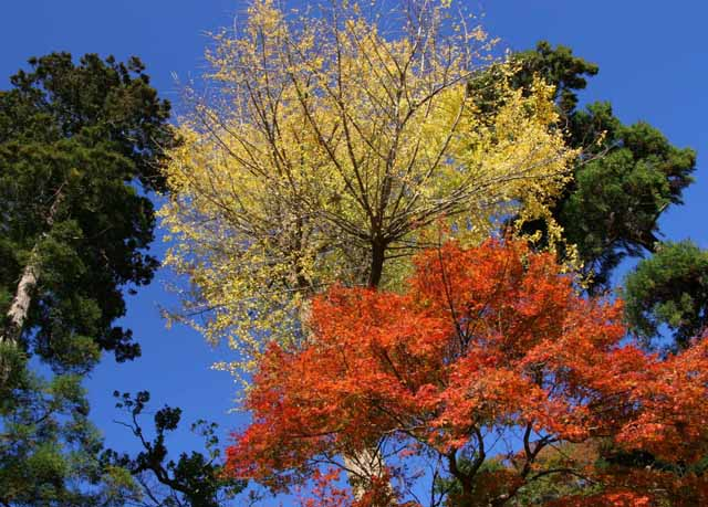 katakamakura20101219