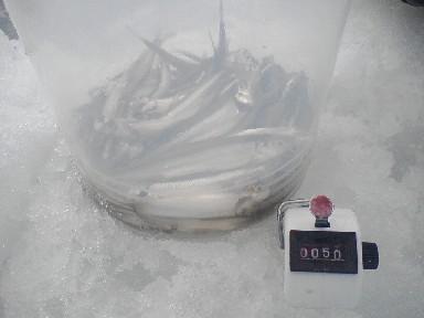 SA380202.jpg