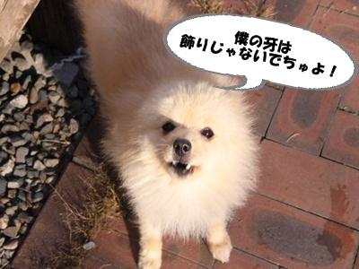 22年1月17紹介ひなたIMG_0005