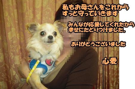 22-6-8優叶003