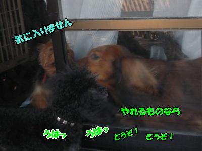 るい悟空ホップ優叶045