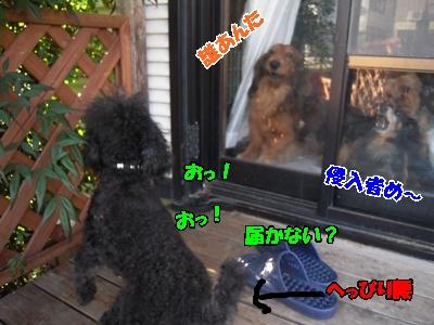 るい悟空ホップ優叶041