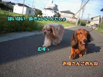 22-7-4散歩033