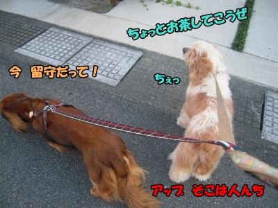22-7-4散歩040