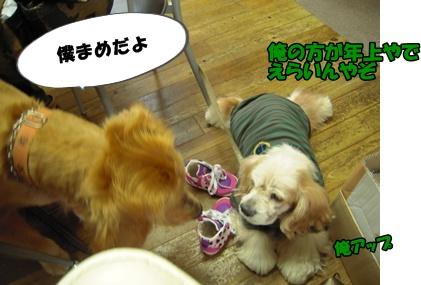 アップ優叶参り007