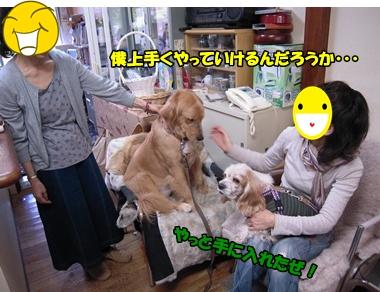 アップ優叶参り035