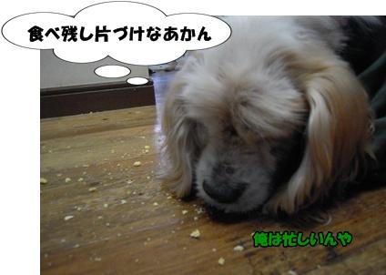 アップ優叶参り047