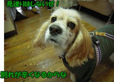 アップ優叶参り043