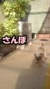 201012010926000ぽっぽ