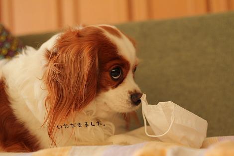 ドロボー犬①