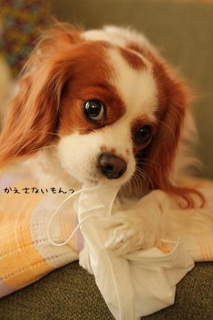 ドロボー犬②