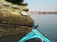 ミドリガメ 20130309