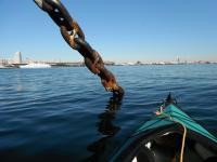 氷川丸の錨20130202