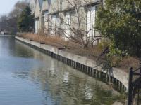 中川運河でアオサギ 20130203