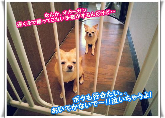 2013-10-11-2usirogami.jpg