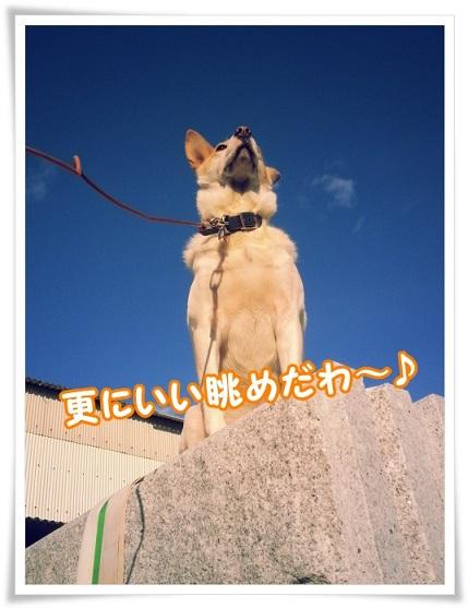 20131113_141047zekkeikana.jpg