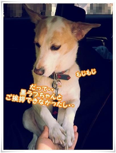 20131116_114327mojimoji_2013112114024572a.jpg