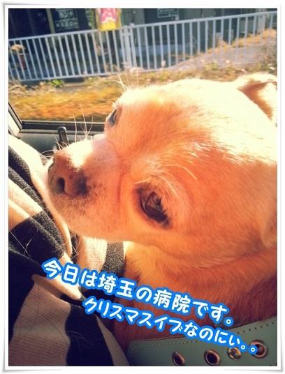20131224_123523saitama_20140110142317e9d.jpg